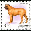 Stock Photo: RUSSI- 2002: shows fauna, dogs
