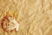 Vintage schelpen gepresenteerd op een vel papier textuur — Stockfoto