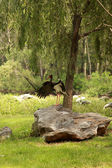 Black stork and gray cranes on the shore of lake — Stock Photo