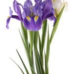 Blue and white irises — Stock Photo #44254289