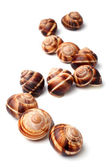 Edible snails (escargot) — Stock Photo