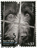 PORTUGAL - 2010: shows dog, image of abandonment of animals — Stock Photo