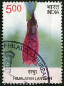 INDIA - 2013: shows Himalayan Lantern, series Wild Flowers — 图库照片