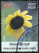 INDIA - 2013: shows Himalayan Mini Sunflower, series Wild Flowers — Zdjęcie stockowe