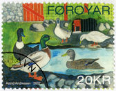 FAROE ISLANDS - 2007: shows Ducks by Astrid Andreasen, series Domesticated Birds — 图库照片