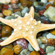 Starfish on pebble — Stock Photo