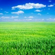 Field of grass and perfect blue sky — Stock Photo