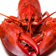 Lobster — Stock Photo #12612651