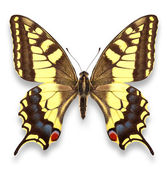 Motyl, żółty zauważył — Zdjęcie stockowe