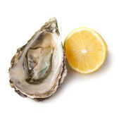 Oyster and lemon on white background — Stock Photo