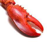Lobster's claw — Stock Photo