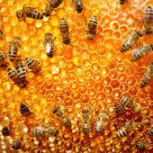 Arbetande bina på honeycells. — Stockfoto