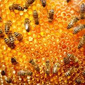 Working bees on honeycells. — Стоковое фото