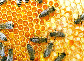 Lavoro api — Foto Stock