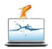 Goldfish in aquarium — Stock Photo