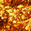Autumn yellow leaves, shallow focus — Stock fotografie