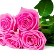Bouquet of beautiful pink roses on white — Foto Stock