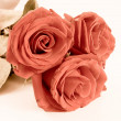 Stock Photo: Close-up shot of red roses