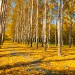 Golden evening fores — Stock Photo