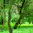 Green forest — Stock Photo #13331560