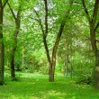 Green forest — Stock Photo #13331562