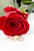 Two gold wedding bands beside a red rose. — Stock Photo