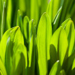 Fresh green grass — Stock Photo #20193627