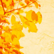 Autumn yellow leaves, shallow focus — Stock Photo