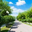 Beautiful park alley in summer — Stock Photo