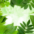Fresh and green leaves on holiday lights — Foto de Stock