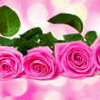 Bouquet of beautiful pink roses — ストック写真