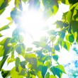 Stock Photo: Green summer leaves and blue sky with sun