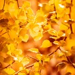 Autumn yellow leaves, shallow focus — 图库照片