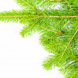 Close up view of the Christmas tree isolated on white — 图库照片