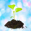 Stock Photo: Growing green plant