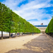 "Sculpted trees alley in garden of ""Palais Royal"" in Paris — Stock Photo #21576079"