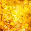 Autumn yellow leaves, shallow focus - Stock Photo