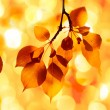 Autumn yellow leaves, shallow focus — Foto Stock