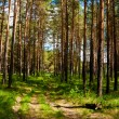 Green forest — Stock Photo #21577141