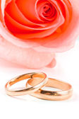 Two gold wedding bands beside a pink rose. — Стоковое фото