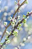 Macro of young foliage on twig — Stock Photo
