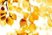 Autumn yellow leaves, shallow focus — Stock Photo