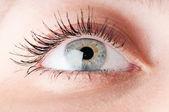 Human eye. macro shooting — Stock Photo