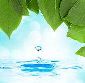 Green leaf with water droplet over water reflection — Stock Photo