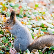 Stock Photo: Squirrel siting on land