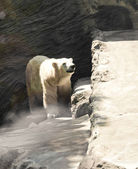 White bear in a zoo — Stock Photo