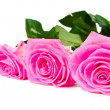 Bouquet of beautiful pink roses — Stock Photo
