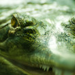Crocodile's eyes above water surface  — Stock Photo
