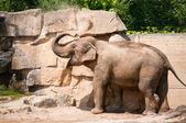 Elefante tomando un sandbath — Foto de Stock