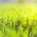 Green summer grass and sun — Stock Photo #26875279